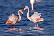 Гърция - езерото Керкини
